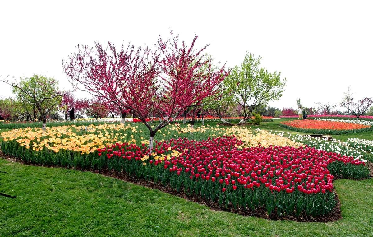 儿童游乐园: 英歌石植物园儿童乐园占地面积3万平方米,是东北最大的